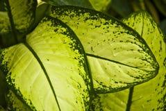 Tropisch groen blad - abstracte achtergrond Stock Foto's