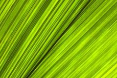 Tropisch groen blad - abstracte achtergrond Stock Afbeelding