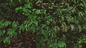 Tropisch groen blad stock afbeelding