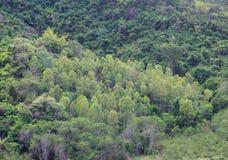 Tropisch groen bos Stock Afbeeldingen