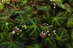 Tropisch groen gebladerte met witte bloeiende bloemen Achtergrond royalty-vrije stock foto's