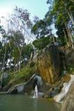 Tropisch hout stock foto's