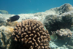 Tropisch koraalrif Stock Afbeeldingen