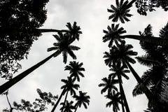Tropisch Landschap Stock Afbeeldingen