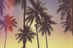Tropisch Landschap Stock Fotografie