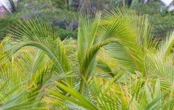 Tropisch Landschap Royalty-vrije Stock Afbeeldingen