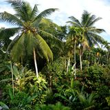 Tropisch Landschap Stock Afbeelding
