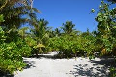 Tropisch landschap (de Maldiven) stock fotografie