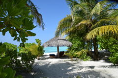 Tropisch landschap (de Maldiven) Stock Foto
