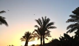 Tropisch landschap met palmen bij zonsopgang stock fotografie