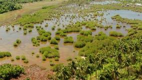 Tropisch landschap met palmen in de Filippijnen stock footage