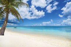 Tropisch landschap met verbazende stranden van het eiland van Mauritius stock foto's