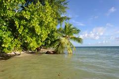 Tropisch Landschap Platte Eiland seychellen royalty-vrije stock foto's