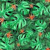 Tropisch naadloos patroon, hand geschilderde waterverfillustratie met bladerenmonstera en strelitzia stock illustratie