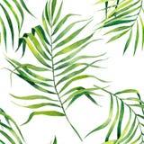 Tropisch naadloos patroon met exotische palmbladen De tropische illustratie van het wildernisgebladerte Uitheemse gewassen Het on royalty-vrije illustratie