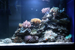Tropisch overzees wateraquarium Royalty-vrije Stock Afbeeldingen