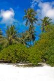Tropisch Palm Beach Royalty-vrije Stock Foto's
