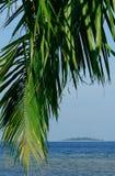 Tropisch palm en eiland Royalty-vrije Stock Foto's