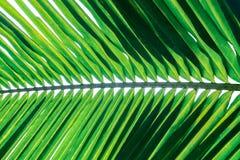 Tropisch palmbladpatroon op wit, abstract groen backgroun Royalty-vrije Stock Foto