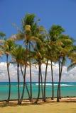 Tropisch palmbosje op strand stock foto's