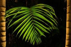 Tropisch palmverlof bij nacht Royalty-vrije Stock Fotografie