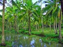 Tropisch paradijs stock afbeeldingen