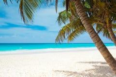 Tropisch paradijs Royalty-vrije Stock Foto