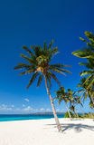 Tropisch paradijs Stock Afbeelding