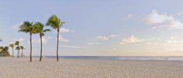 Tropisch paradijs in het Strand Florida van Miami met palm Stock Afbeeldingen