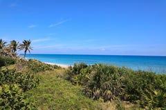 Tropisch Paradijs in Zuid-Florida Stock Foto