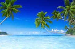 Tropisch Paradijsstrand met Palm Royalty-vrije Stock Foto