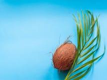 Tropisch paradize concept: een palmblad en een gehele kokosnoot royalty-vrije stock foto