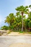Tropisch park Stock Foto's