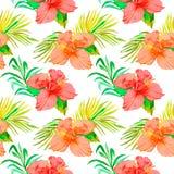 Tropisch patroon Hibiscus, monsterablad, palmbladen Stock Afbeelding