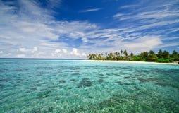 Tropisch rapport stock foto's