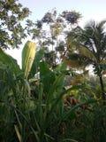 Tropisch regenwoud Royalty-vrije Stock Fotografie