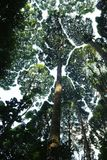 Tropisch regenwoud Stock Afbeelding