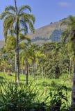 Tropisch Regenwoud royalty-vrije stock afbeelding