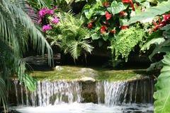 Tropisch regenwoud Royalty-vrije Stock Foto's
