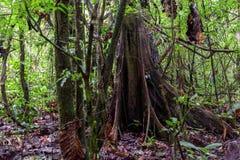 Tropisch regenwoud, Cuyabeno-Reserve, Zuid-Amerika, Ecuador Stock Fotografie