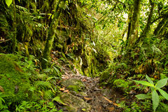 Tropisch regenwoud in het Nationale Park, Ecuador Stock Foto's