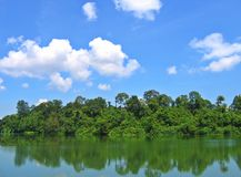 Tropisch regenwoud - Singapore royalty-vrije stock fotografie