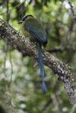 Tropisch regenwoud van Colombia stock fotografie