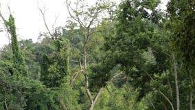 Tropisch regenwoud voor de berg stock footage