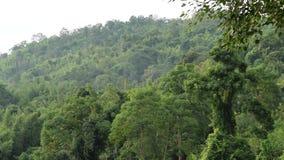 Tropisch regenwoud voor de berg stock videobeelden