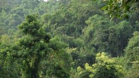 Tropisch regenwoud voor de berg stock video