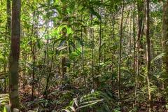 Tropisch regenwoudlandschap, Amazonië, Cuyabeno, Ecuador Stock Afbeeldingen