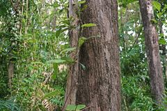 Tropisch regenwoudlandschap, ecosysteem, Thailand royalty-vrije stock fotografie