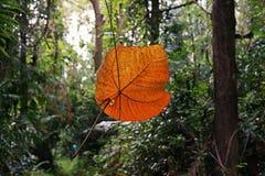 Tropisch regenwoudlandschap, ecosysteem, Thailand stock afbeeldingen
