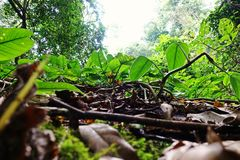 Tropisch regenwoudlandschap, ecosysteem, Thailand stock fotografie